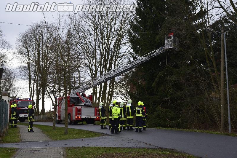 Baum in Freileitung - Großröhrsdorf