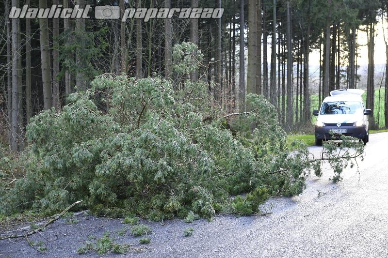 Baum auf Straße - Gersdorf