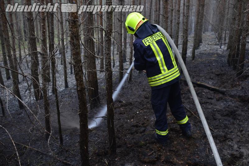 Zwei Hektar Wald brennen bei Leippe-Torno