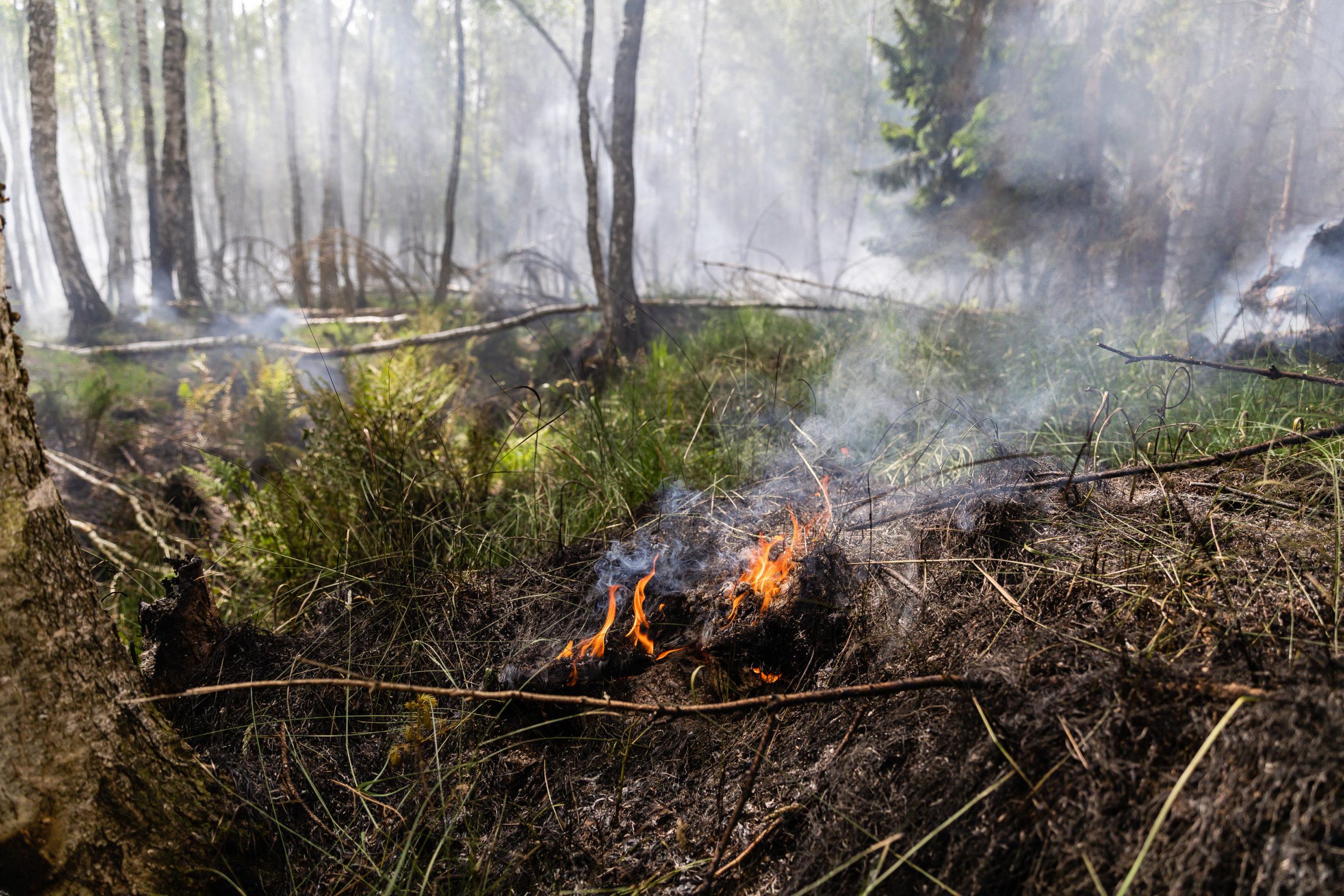 Waldbrand-Rund-5-000-Quadratmeter-bei-Niesky-in-Flammen